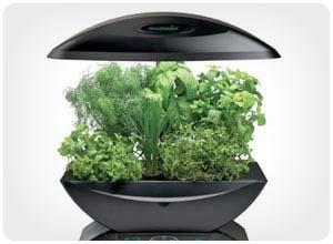 aerogarden herb kit