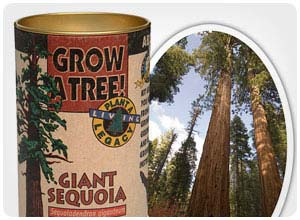 grow your own world's tallest tree