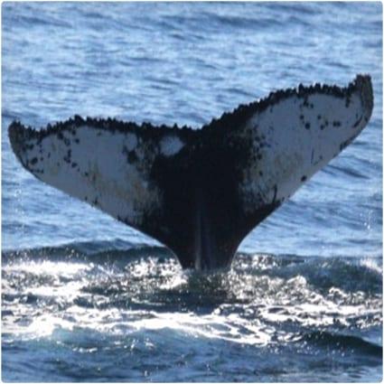 Help Marine Animals