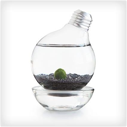 Moss Ball Light Bulb Aquarium