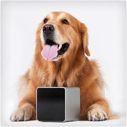 Pet Cube