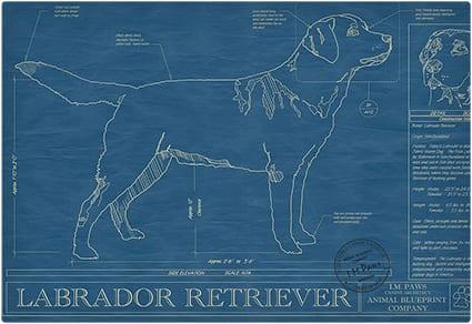 Dog Blueprint