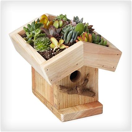 Living Roof Birdhouse Kit