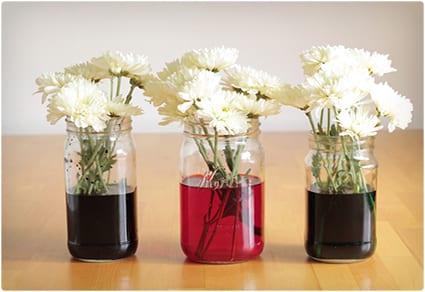 DIY Colored Flowers