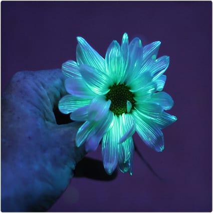 DIY Glowing Flowers