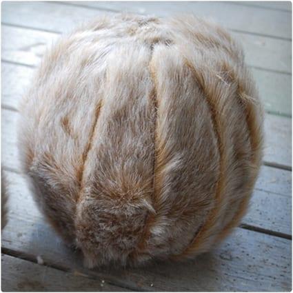 Fur Covered Pumpkin
