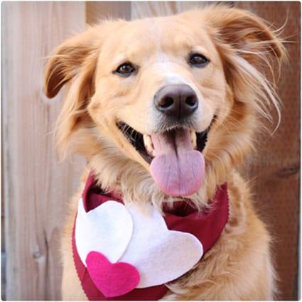 Valentine Dog Scarf