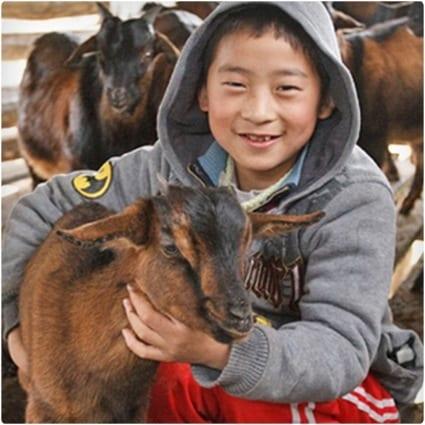 Get_Him_a_Goat