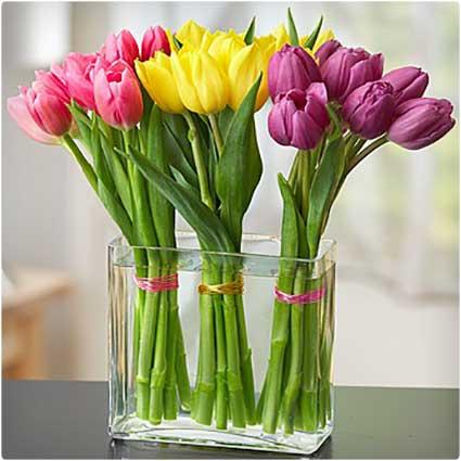 Modern-Tulips