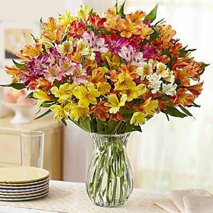 Peruvian-Lilies