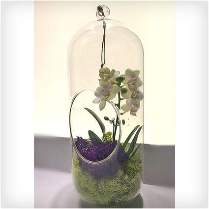 Orchid Plant Terrarium Glass 12 Inch