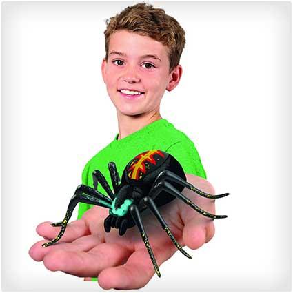 Wild-Pets-Spider-Habitat