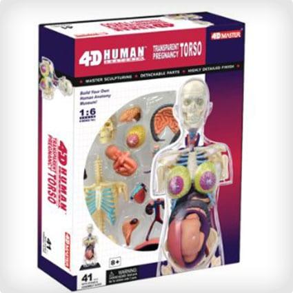 4-D Anatomy Model