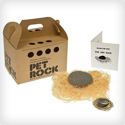 A Pet Rock