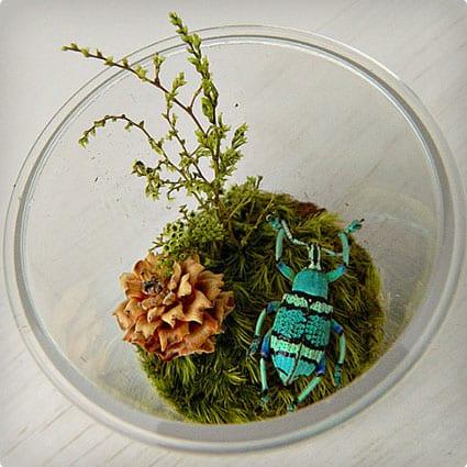 Bug Terrarium Kit for Child