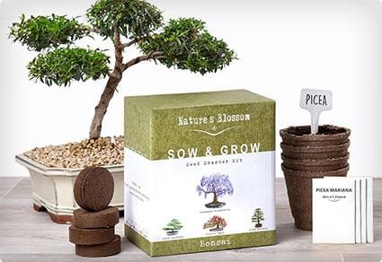 Nature's Blossom Bonsai Growing Kit