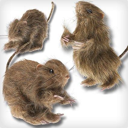 Hairy Rats