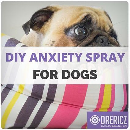 Diy Anxiety Spray For Dogs