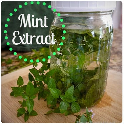 Homemade Mint Extract Recipe