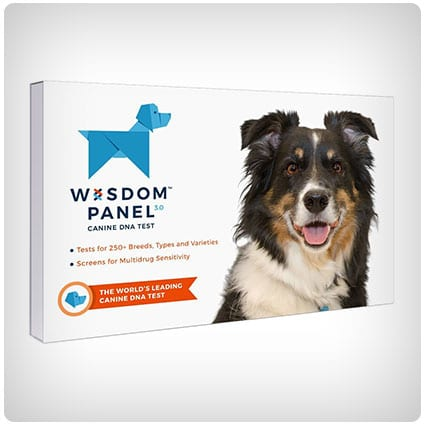 Wisdom Panel Breed Identification DNA Test Kit