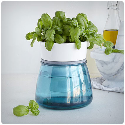 Self-Watering Kitchen Herb Pot