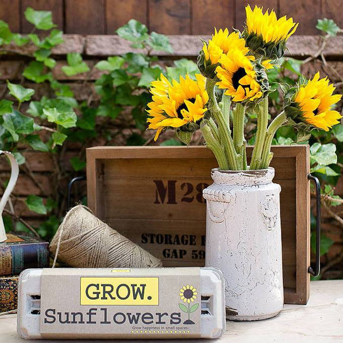 Sunflower Garden Grow Kit